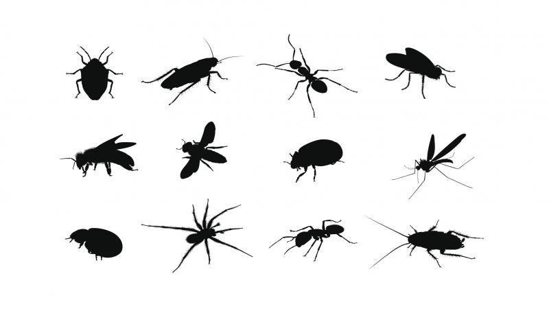 آشنایی با انواع گزیدگی حشرات