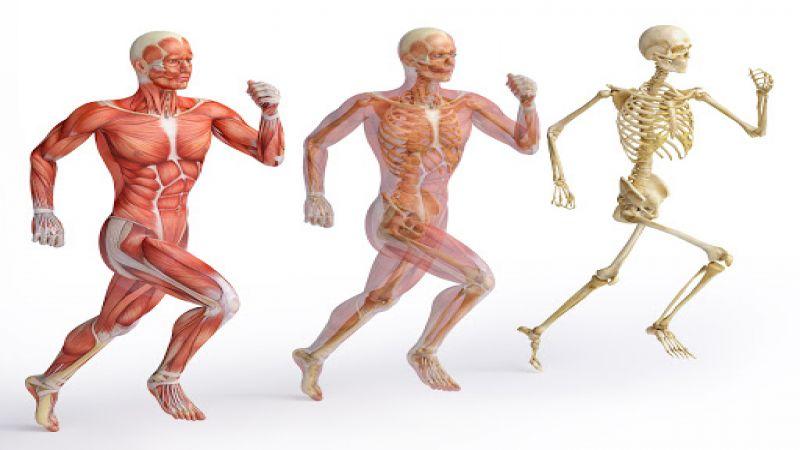 حقایق شگفت انگیز درباره بدن